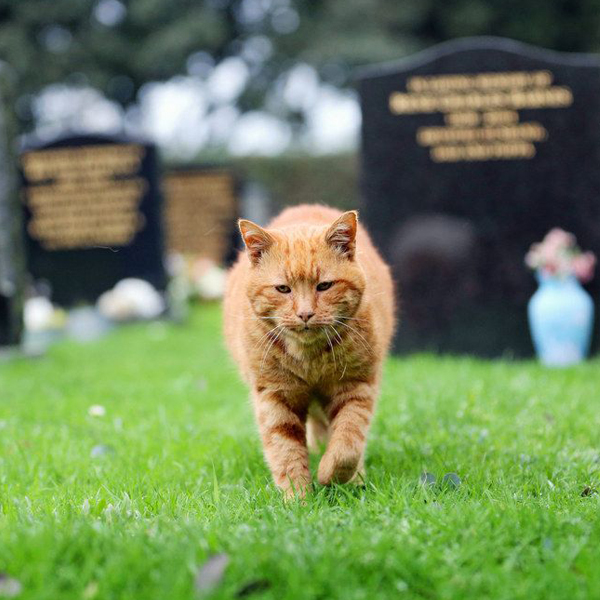 Barney – The Cemetery Cat